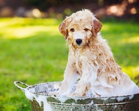 Consider a pup-and-car wash as your next fundraising idea for sports teams.